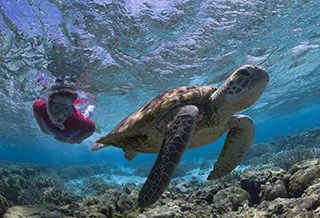 Activity Snorkelling with Turtles